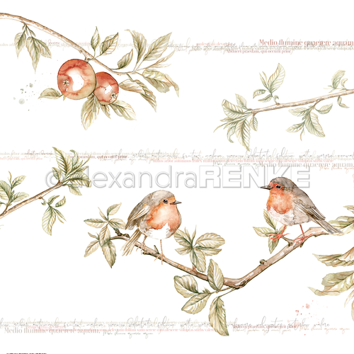 A. RENKE - Carta  'Big robin pair'